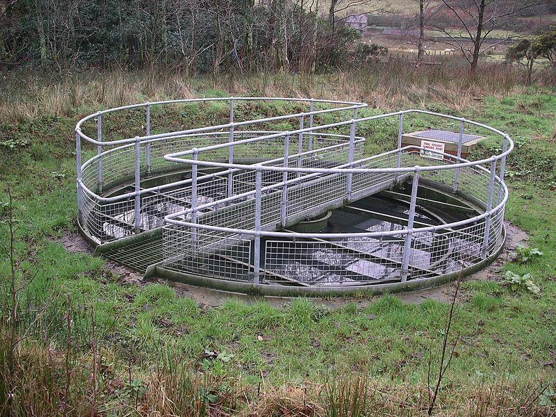 Secondary sedimentation tank 1 w.JPG