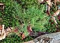 Seedling (8199057158).jpg
