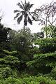 Selva (8078104829).jpg