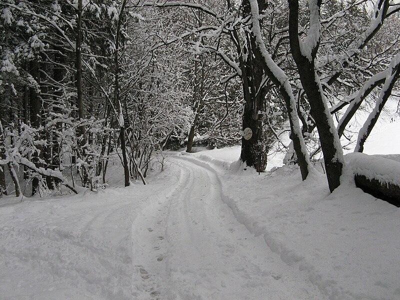 File:Sentiero Alpe Vicerè-inverno.JPG