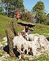 Shearing season.jpg
