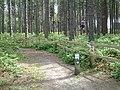 Sherwood Pines Forest Park - geograph.org.uk - 18843.jpg