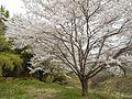 Shinshushinmachi Kamijo, Nagano, Nagano Prefecture 381-2404, Japan - panoramio (11).jpg