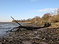 Shoreline south of Nether Hall - geograph.org.uk - 661370.jpg