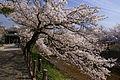 Shukugawa05s3872.jpg