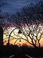 Single Streetlamp Sunrise - Flickr - joiseyshowaa.jpg