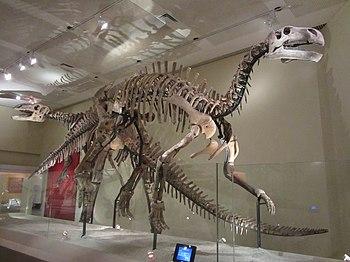 Skeletons of Lanzhousaurus magnidens and Jintasaurus meniscus.JPG