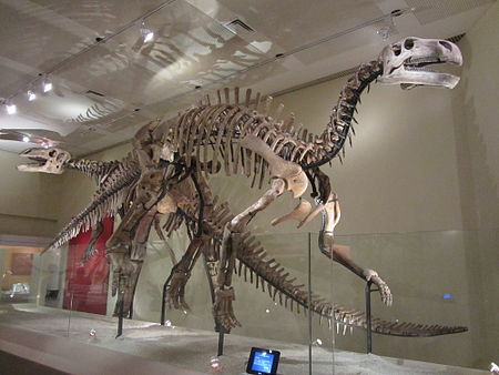 Jintasaurus