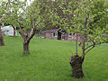 Small orchard near Iburndale Beck - geograph.org.uk - 804753.jpg
