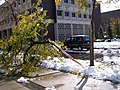 "Snow and tree damage from Lake Storm ""Aphid"" at UB North Campus, October 2006 (03).jpg"