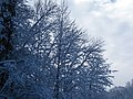 Snow from Winter Storm Skylar (12 March 2018) (near Frenchburg, Menifee County, Kentucky, USA) 3.jpg