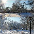Snow idyll.jpg