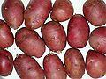 Solanum tuberosum Rosalind20100329 02.jpg
