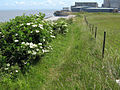 Somerset Coastal Path west of Hinkley Point - geograph.org.uk - 1357113.jpg