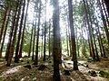 Soonwald – Nähe Hochsteinchen bei Ellern - panoramio.jpg