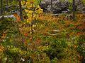 Sorsele NV, Sweden - panoramio (19).jpg