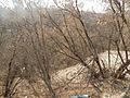 Sovetskiy rayon, Bryansk, Bryanskaya oblast', Russia - panoramio (220).jpg