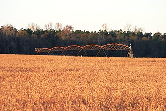 Orangeburg County, South Carolina - Image: Soybean 1292