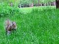 Squirrel2 (150800032).jpg