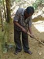 Sri Lanka-Décorticage de la cannelle (1).jpg
