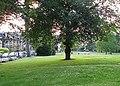 St Andrew's Park - geograph.org.uk - 198027.jpg