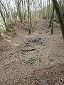 Stara duba 2 nadvori.jpg