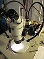 Starr-101202-9717-Eucalyptus sp-habitat and ant ID microscope-Olinda-Maui (24939521662).jpg