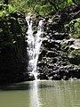 Starr-110330-4276-Begonia hirtella-habitat and waterfall-Keanae-Maui (25081510335).jpg