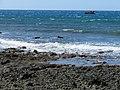 Starr-170919-0206-Capparis sandwichiana-view ocean lava tour boat-La Perouse-Maui - Flickr - Starr Environmental.jpg