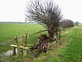 Stile and hedgerow - geograph.org.uk - 344738.jpg