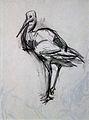 Stork (drawing).jpg