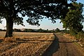 Stubble field on Bredon Fields Farm - geograph.org.uk - 52741.jpg