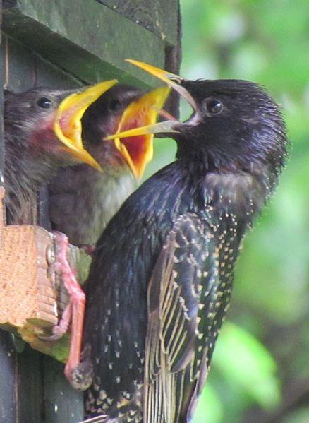 ▶ 6′ – Top-Ten Gartenvögel – so könnt ihr sie erkennen – NABU