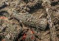 Submerged Coca-Cola bottle from USS Arizona.jpg
