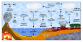 Sulfur Cycle (Ciclo do Enxofre).png