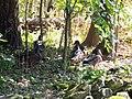 Sulphur Springs Conservation Area (43759439795).jpg