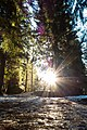 Sunshine - panoramio (3).jpg