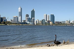 Swan River (Western Australia) - Black swans on the shore of the Swan River, with the Perth skyline in the background
