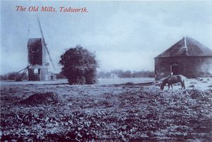 Tadworth - Some of the windmills, c.1910