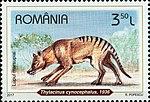 Tasmanian-Tiger-Thylacinus-cynocephalus.jpg