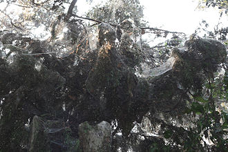 Lake Tawakoni - Image: Tawakoni spider web 2622
