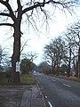 The Bodnets, Plantation Lane - geograph.org.uk - 111524.jpg