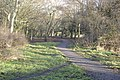 The Great Aycliffe Way - geograph.org.uk - 1111877.jpg