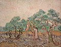 The Olive Orchard.JPG