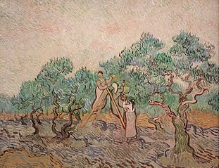The Olive Orchard