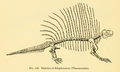 The Osteology of the Reptiles-248 dfgh.png