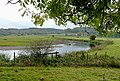 The River Trent near Colwich, Staffordshire - geograph.org.uk - 1557155.jpg