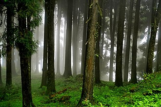 Neora Valley National Park - Image: The mystic forest