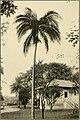 The ornamental trees of Hawaii (1917) (14579315718).jpg