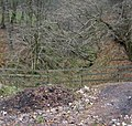 The wooded slopes of Ashton Clough - geograph.org.uk - 1140246.jpg